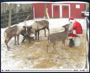 Watch Santa feed his reindeer